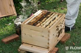 beginner beekeeping with a flow hive flow hive flow