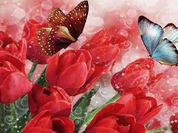 tulips butterflies flowers bokeh butterfly 2560x1600