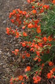 native irish plants 49 best rain garden native plants images on pinterest rain