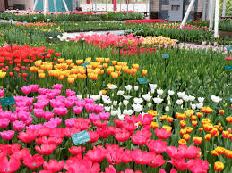 most beautiful flower gardens in the world garden trends