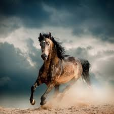 mustang horse running wall glass art horse running in the dust buy at europosters eu