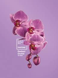 pantone color of the year hex pantone u0027s colour of the year 2014 is a rosy pink digital arts