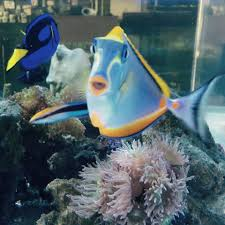 Home Decor In Fairview Heights Il Reef Monsters Home Facebook