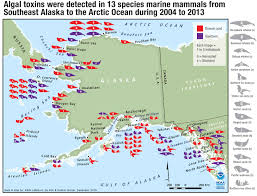 Dutch Harbor Alaska Map by Alaska Journal Algal Toxins Found In Alaska Marine Mammals For