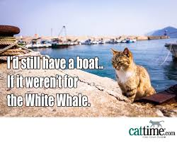 Cat Buy A Boat Meme - 45 more hilarious cat memes to make your day better cattime