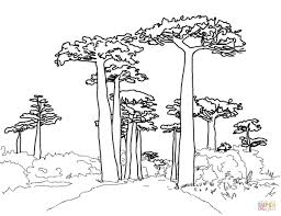 avenue of the baobabs coloring page free printable coloring pages