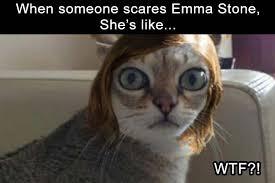 Scared Cat Meme - scared emma stone