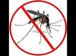 Best Mosquito Killer For Backyard Best Mosquito Repellent