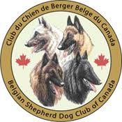 belgian sheepdog alberta bsdcc belgian shepherd dog club of canada groenendael laeken