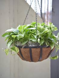 best outdoor hanging plants for spring hgtv