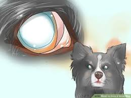 Temporary Blindness In Dogs 77 Best Tips For Blind Dogs U0026 Dog With Low Vision Images On