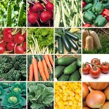 best 25 vegetable seeds for sale ideas on pinterest planting a