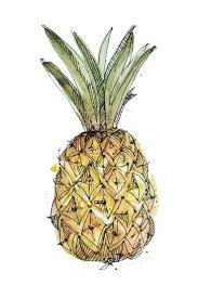 drawn pineapple water pencil and in color drawn pineapple
