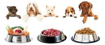 alimentazione casalinga gatto dieta barf per il e non animalieanimali eu portale