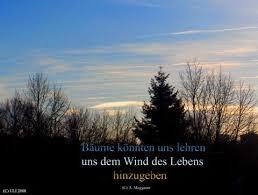 himmel spr che baum himmel wolken grußkarten e cards postkarten sprüche