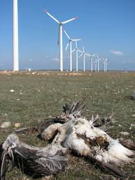 kipeto wind energy project could wipe out critically endangered