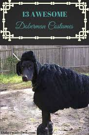 cerberus 3 headed dog spirit halloween 43 best dog costumes images on pinterest dog costumes animals