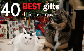 40 best gifts for dogs and cats this christmas 2017 crittersitca