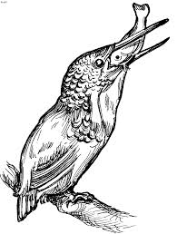 birds coloring pages kids website for parents