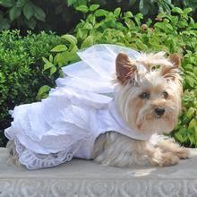 dog wedding dress cloud nine smocked dog dress by oscar newman with same day