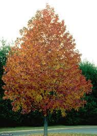 fast growing trees hgtv