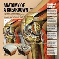 Diagram Of Knee Anatomy Knee Diagram Unmasa Dalha