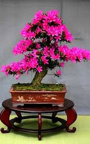 30 of the most beautiful bonsai trees bonsai 30th and plants