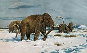 woolly mammoth brought cloned bone marrow