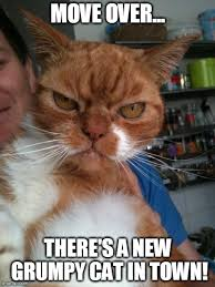 Evil Cat Meme - image tagged in memes evil cat cats imgflip