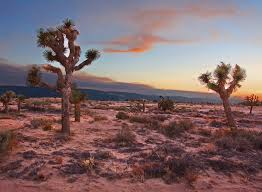 mojave desert native plants the 16 most spectacular deserts in the world