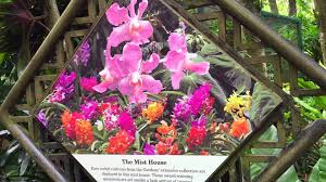 Botanical Garden Pictures by National Orchid Garden Singapore Botanic Gardens Youtube