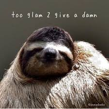 the most important sloths on instagram