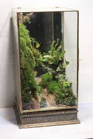 terrariums plants at bacaaddadfaecc on home design ideas with hd