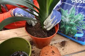 House Plants Diseases - garden design garden design with repotting houseplants amateur