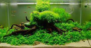 Aquarium Aquascapes Aquascaping Design Among Bright Lighting Clear Water Sea Plants