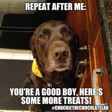 Chocolate Lab Meme - funny chocolate lab memes mne vse pohuj