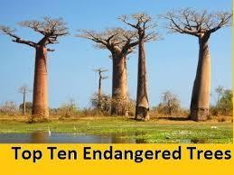 top ten endangered trees