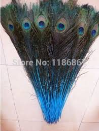Peacock Feather Centerpieces by Free Shipping 50pcs Lot Blue Lake Natural Big Eyes Peacock Feather