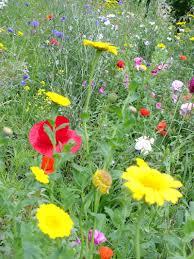 Flower Area - garden in foynes county limerick wild atlantic way garden