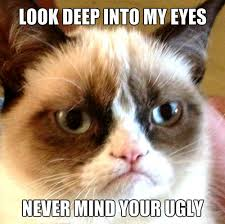 Ugly Cat Meme - meme images ugly wallpaper and background photos 35201458