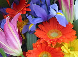 Flower Of The Month Flower Of The Month Clubs Will Brighten Their Day