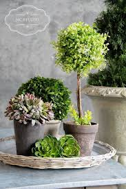 Indoor Plant Arrangements Best 25 Small Potted Plants Ideas On Pinterest Plants Indoor