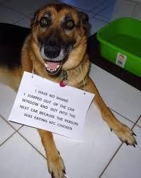 Smiling Dog Meme - the 100 best dog memes ever dog memes memes and dog