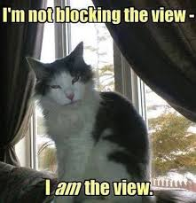 Omg Cat Meme - talk about being vain omg cat memes kitty cat humor funny joke