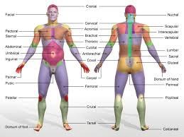 Directional Terms Human Anatomy Anatomical Terms Of Location Human Body Human Anatomy Orientation