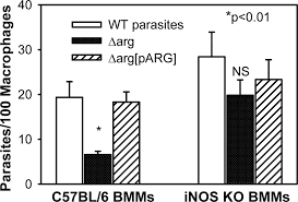 an effect of parasite encoded arginase on the outcome of murine