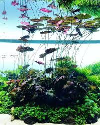 Aquascape Designs Products Best 25 Aquarium Design Ideas On Pinterest Aquarium Aquarium