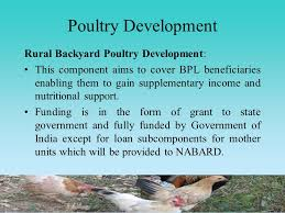 Backyard Poultry In India Department Of Animal Husbandry Dairying And Fisheries Government
