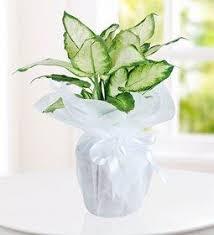 sending flowers internationally send flowers internationally from canada style by