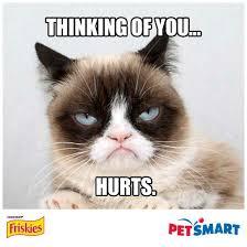 Create A Grumpy Cat Meme - 4167 best grumpy cat images on pinterest grumpy cat grumpy